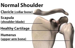A Normal Shoulder